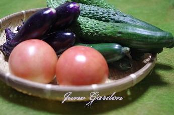 0702頂き物野菜