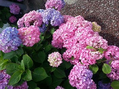 2014-06-07-08-50-47_photo.jpg