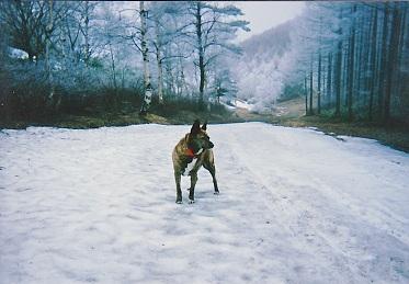 峰の原高原にて 残雪