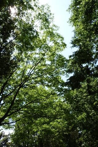 5月の緑道②