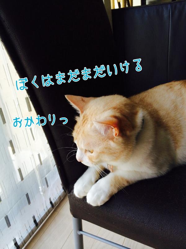 20140720215011906.jpg