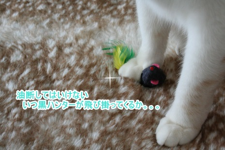 IMG_3515.jpg