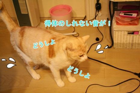 IMG_3628.jpg