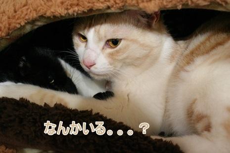 IMG_3907.jpg