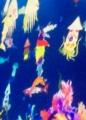 01泳ぐ魚