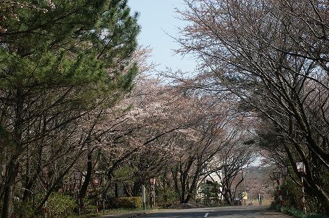 DSC三崎公園04352