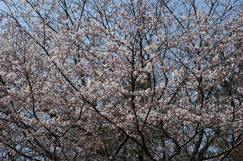 DSC三崎公園04357