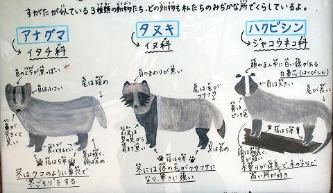 ハクビシン、ムジナ、タヌキ 違いはDSC04514