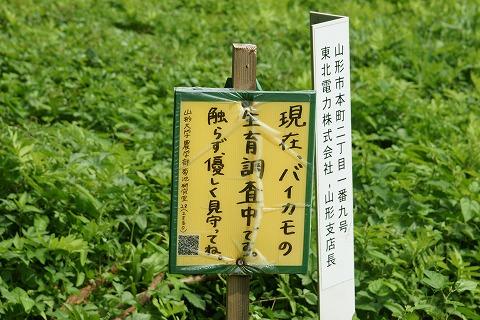 牛渡川DSC03734