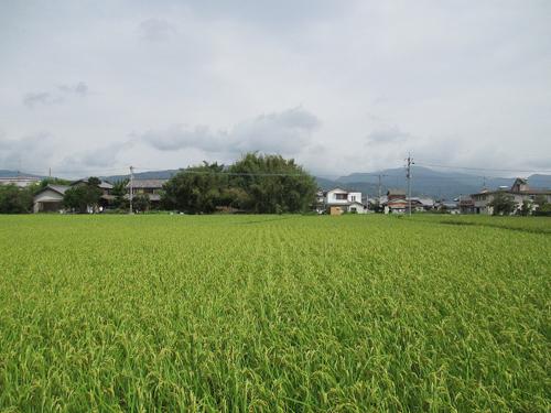 西条城・川島城・脇城・大西城 001