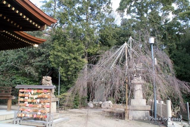 弓弦羽神社 境内