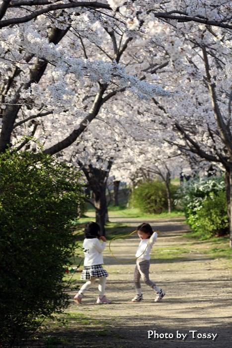 桜の下で遊ぶ子供