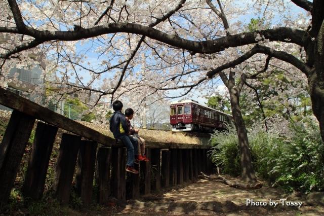 桜と少年と電車