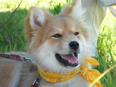 さら犬親会201007