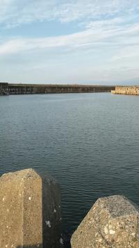 0820岩瀬漁港