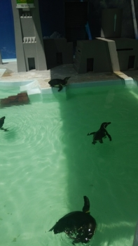 nogeyama penguin1
