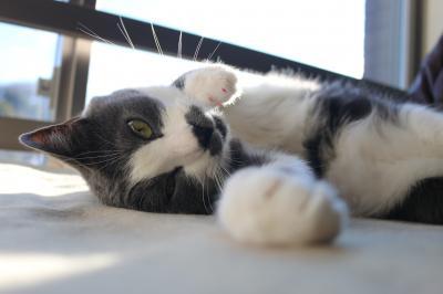 猫パーンチ!