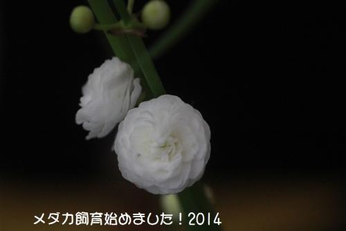 IMG_0068_20140825200740dc2.jpg