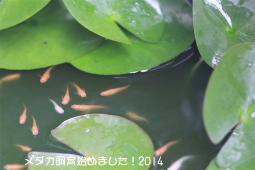 IMG_0123_201408252010413dd.jpg