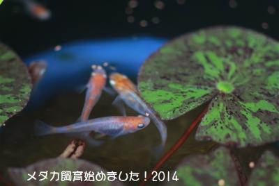IMG_0569.jpg
