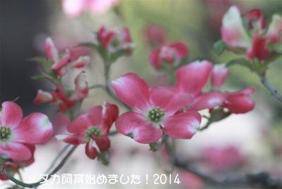 IMG_0593.jpg
