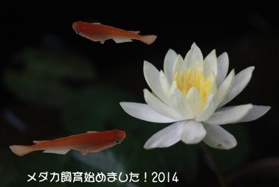 IMG_13358.jpg