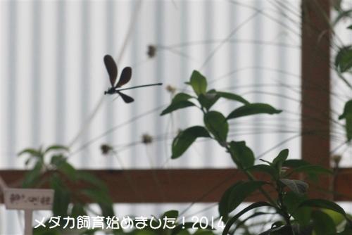 IMG_2254.jpg