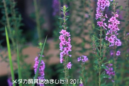 IMG_2383.jpg
