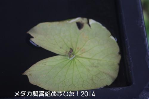 IMG_2523.jpg