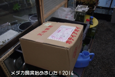 P1050518.jpg