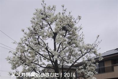 P10507321.jpg