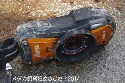 P1050755.jpg