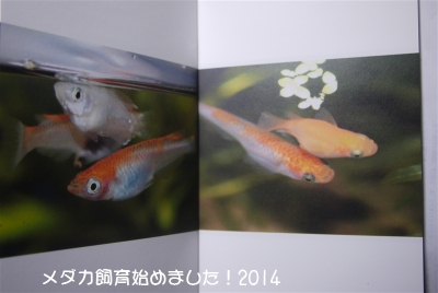 P1060166.jpg