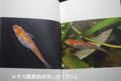 P1060168.jpg