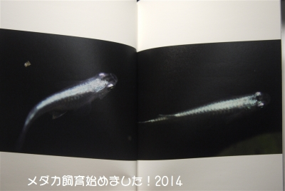 P1060169.jpg