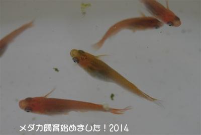 P1070166.jpg