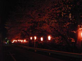 14_夜桜_1