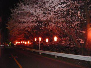 14_夜桜_2