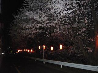 14_夜桜_3