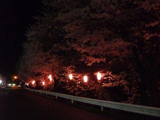14_夜桜_5