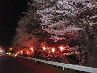 14_夜桜_6