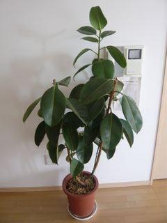 14_植物_6