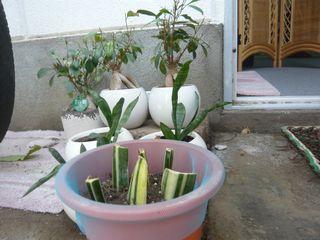 14_植物_8