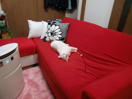 平成26年(2014年)4月22日カバーかけたソファで