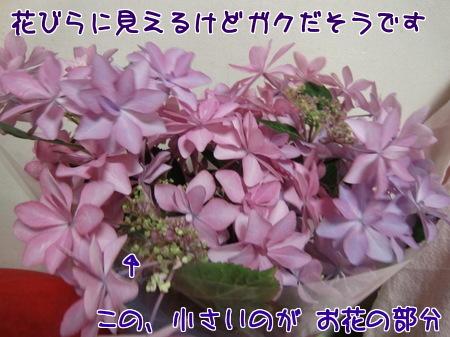 XL5UaYl3mjONx9x1402756277_1402756548.jpg