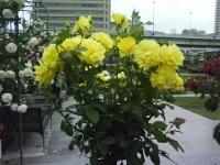 J0010348_20140516144350557.jpg