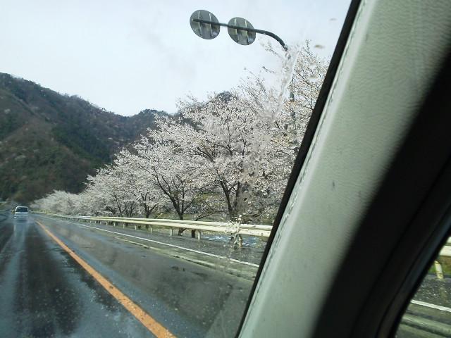 406takahasisakura.jpg