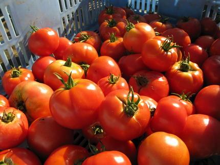tomato2014-07-25 08-11-12_0005