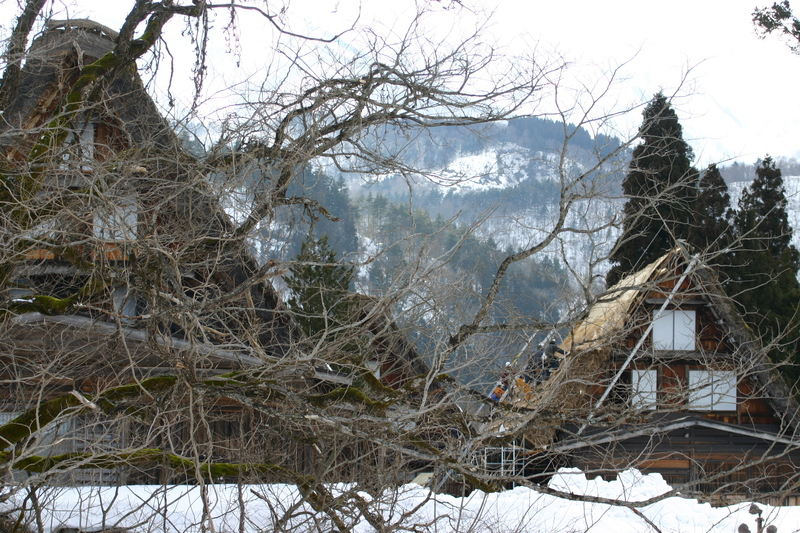 白川郷に来た時、まずは かん町の「三連合掌」に立ち寄ることにしています~ただ今、茅葺き屋根の葺き替え作業中!⑨