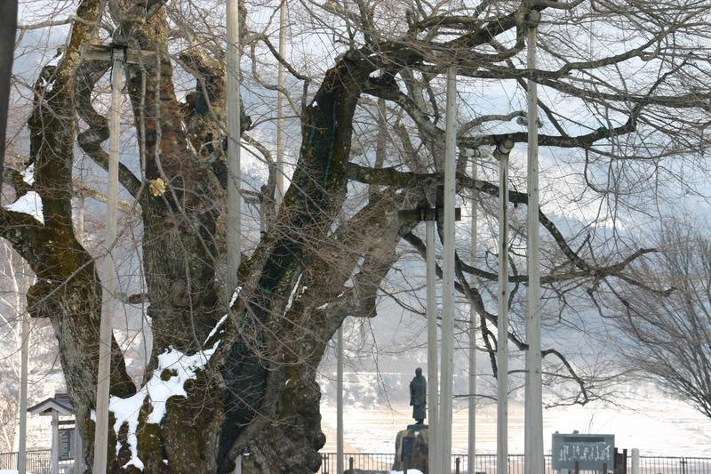 荘川町~国道156号線 御母衣ダム~世界遺産白川郷合掌集落 新緑が美しい4月下旬から5月 上旬に荘川桜が咲き始めます! ①
